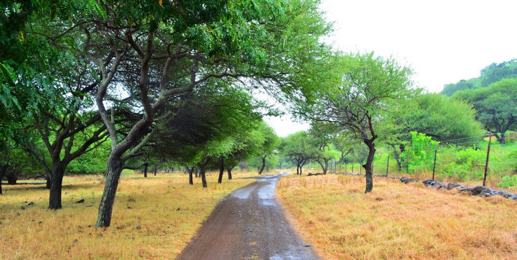 casela-road